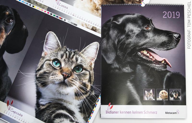 """News Metacam Kalendar """"Tierische Blickfänge!"""""""